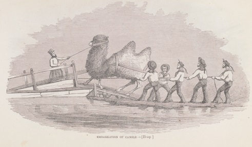 Camels being loaded for transport, as illustrated in the report. (Image by University of Virginia Digitization Services)