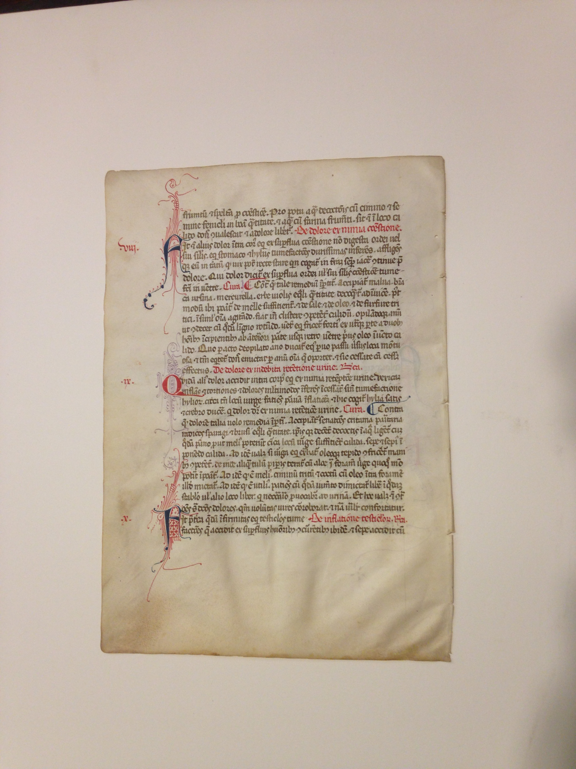 Verso of the manuscript leaf shown above. the chapters concern treatments for certain equine ailments.  (MSS 15703)