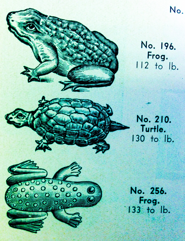 hallfrogs